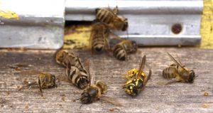 Wasp_attack