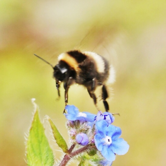 Layla Brooks Maida Vale London, Bee in flight at Kew Gardens