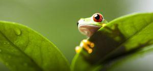 AGsense_Atrazine_Amphibians-and-Atrazine