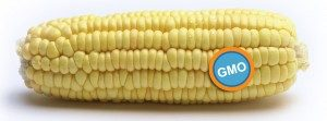 corn-label-300x111