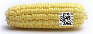 cornQRcode