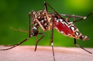 16735-close-up-of-a-mosquito-feeding-on-blood-pv